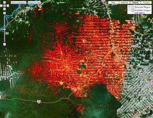 google-deforestation-