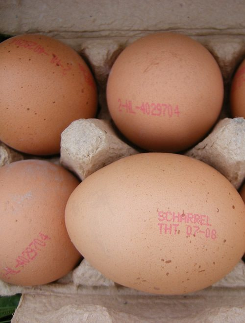 dioxin contaminated eggs germany