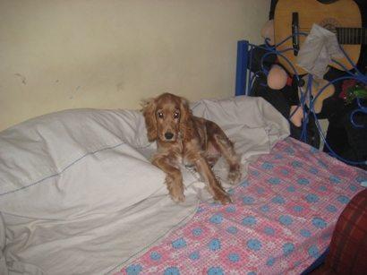 heidi my dog 1