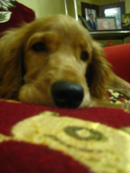 heidi my dog 2