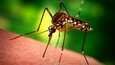 7 Ways how to treat and prevent mosquito bites