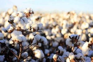Organic cotton benefits both you and the farmer