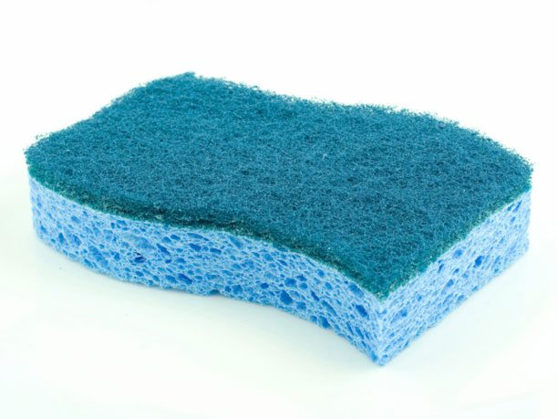 kitchen sponge germs