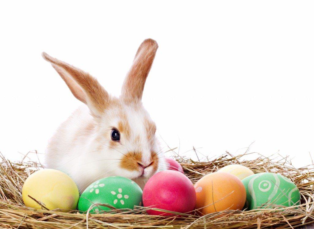 Esater bunny
