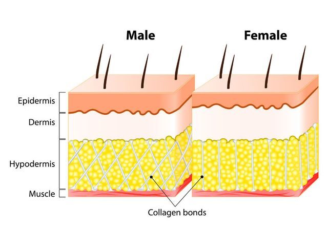 cellulite-structure-male-vs-female