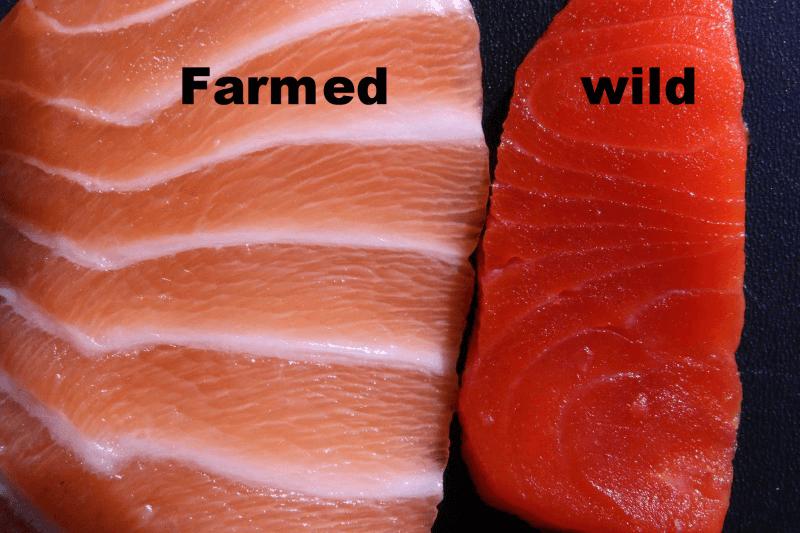 wild_vs_farmed_salmon