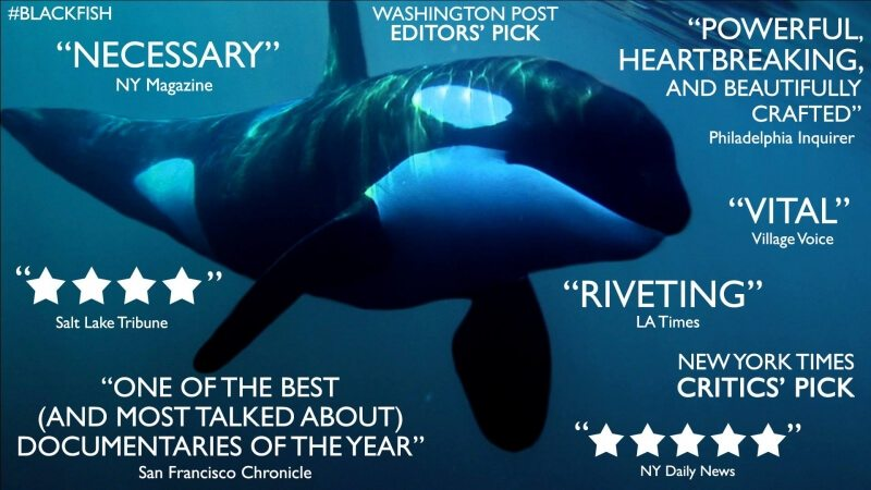 blackfish_documentary_tilikum