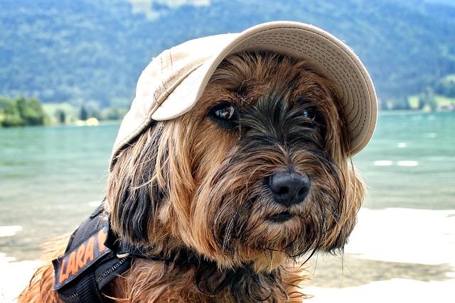 dog-cap_ut