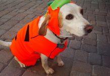 dog dressing